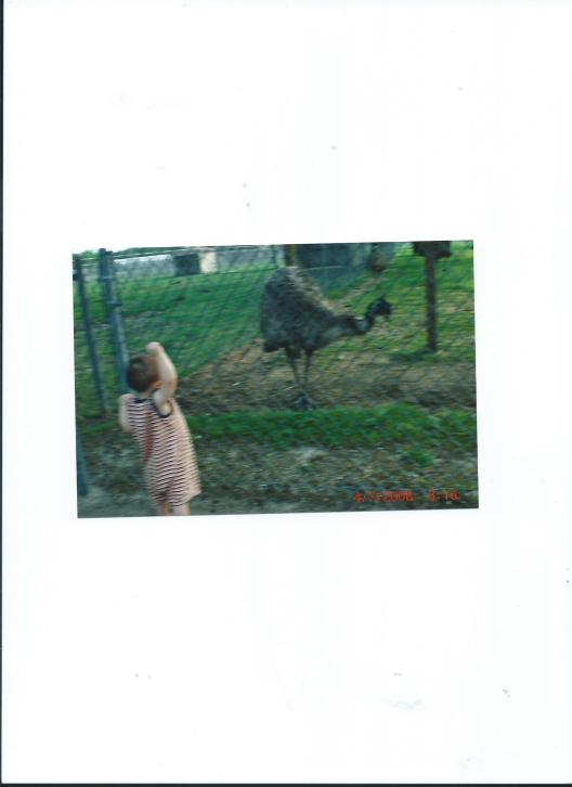 HELLO, MR. EMU!