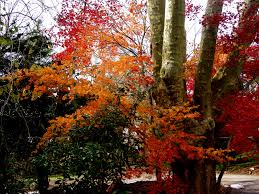 bryn mawr college.fall leaves.3