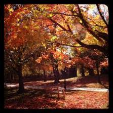 Bryn Mawr College.Fall Trees.Orange Leaves