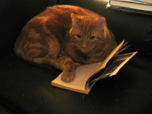 Cat with book