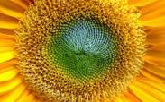 sunflower.center.core