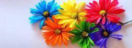 daisies.2