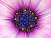 purple flower.2