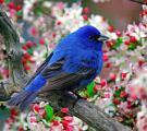 songbird.2